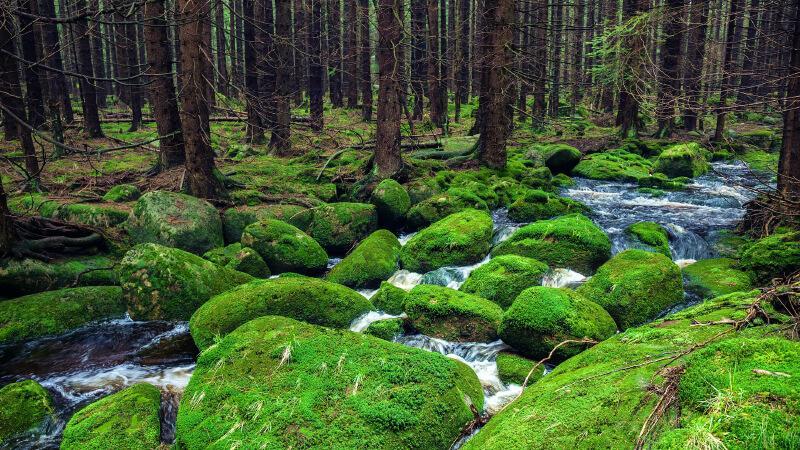 جاهای دیدنی آلمان- جنگل سیاه آلمان